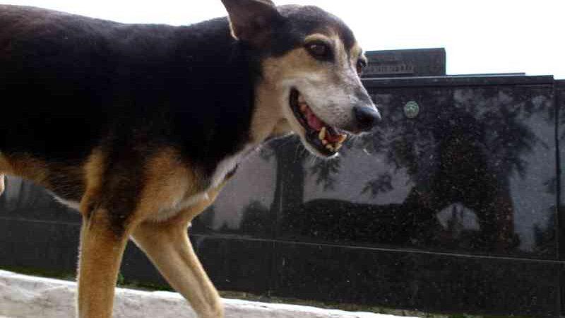Justiça determina que Patos (PB) execute controle populacional de animais