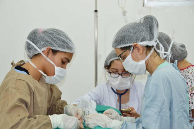 Agendamento para esterilização de animais em João Pessoa (PB) será online; veja como fazer