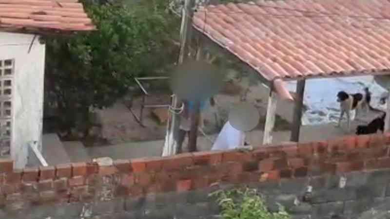 Animais são alvo de maus-tratos com cabo de vassoura e toalha em Olinda, PE; veja vídeo