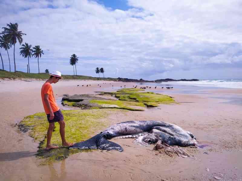 Filhote de baleia é achado morto na praia de Enseada dos Corais em Cabo de Santo Agostinho, PE