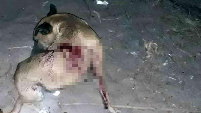 Cachorro é esfaqueado após latir em motociclista em cidade do Piauí