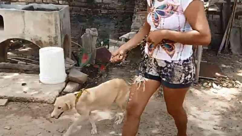 Homem é preso suspeito de estuprar cadela no norte do Piauí