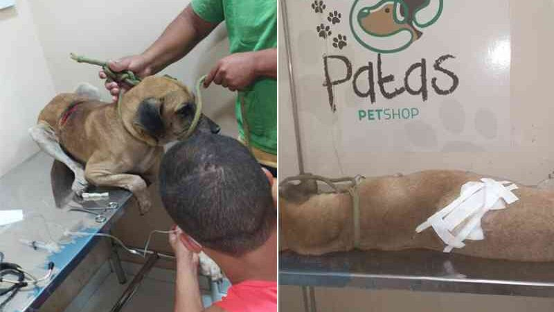 Piauí tem primeira prisão por maus-tratos animais; cão tomou 60 pontos