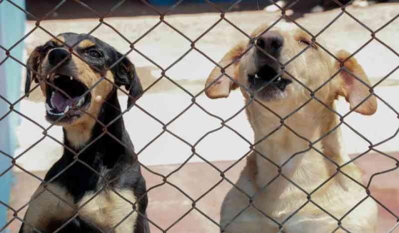 Apucarana (PR) resgata 9 animais por semana em situação de maus-tratos