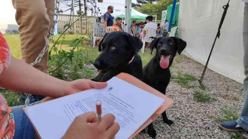 Mais de mil animais foram castrados na última ação do Castramóvel em Araucária, PR