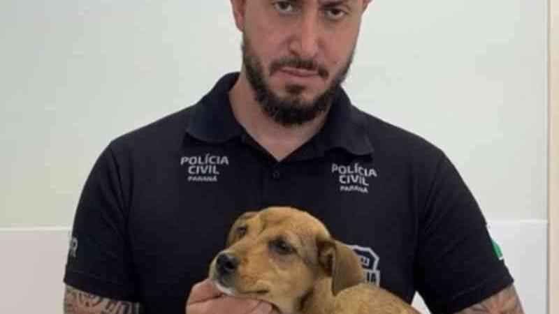 Polícia encontra filhote de cachorro com vidro no ânus, em Campo Largo, PR