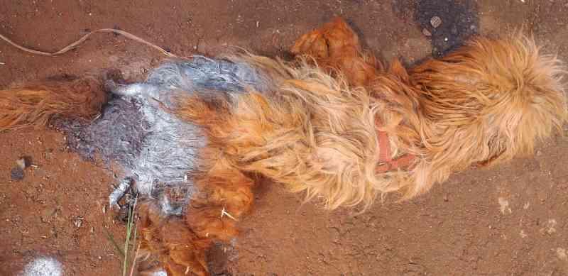 Animais abandonados semanalmente no bairro Veneza causam indignação a morador de Cascavel, PR