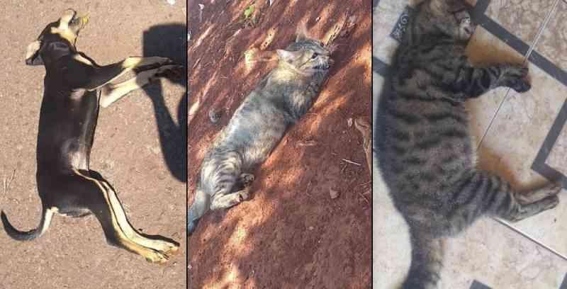 Envenenamento de animais em dois bairros da região Sul de Cascavel (PR) revolta população