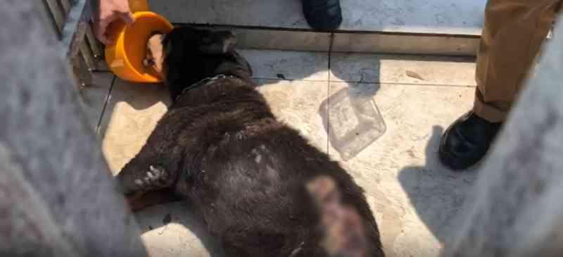 Tutor de cadela é preso em flagrante após polícia constatar maus-tratos em Curitiba, PR; vídeo