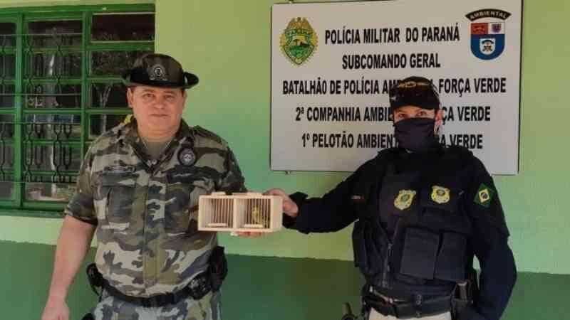 PRF apreende pássaro silvestre transportado em veículo de Londrina, PR