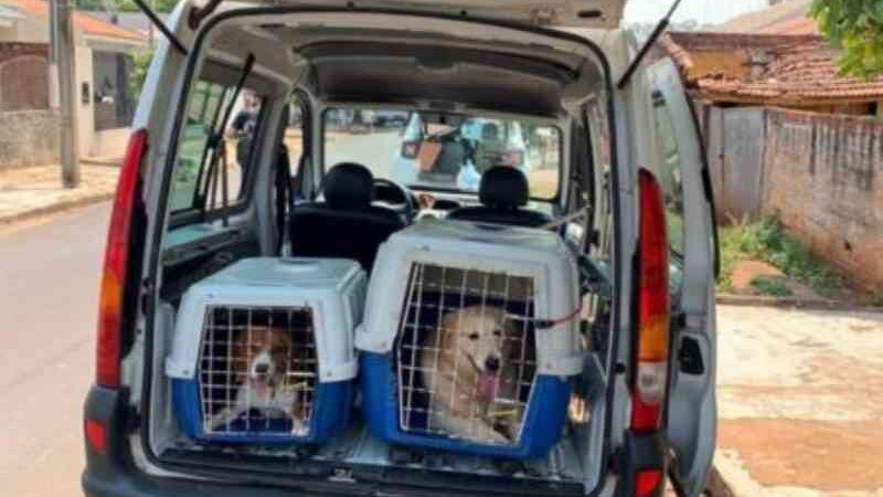 Dezenas de cães são resgatados de criadouro clandestino em Sarandi, PR