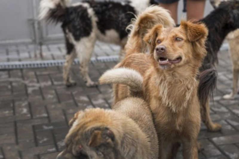 Saiba como agendar castração gratuita de cachorros e gatos em Pérola, PR