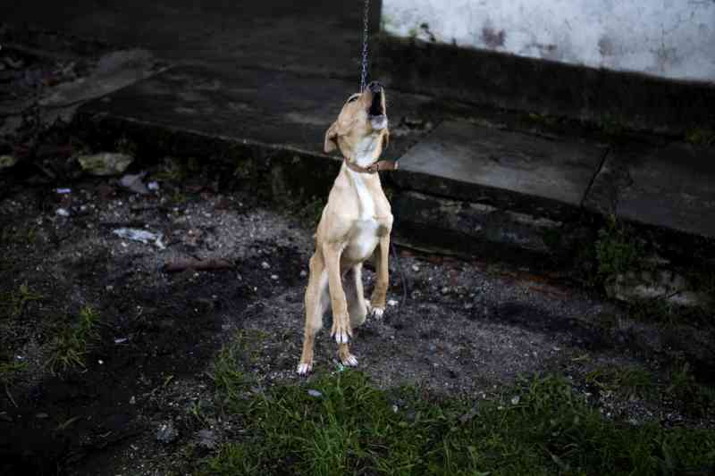 Há um novo site para denunciar maus tratos a animais nos Açores, em Portugal