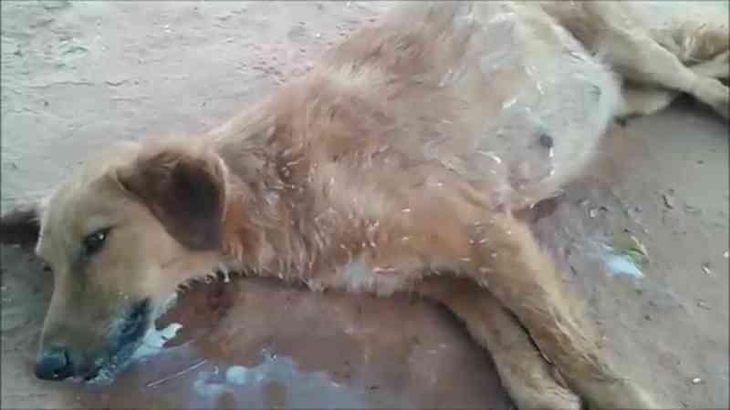 Dezenas de cães envenenados em Vizela por disputas de caçadores, denuncia PAN
