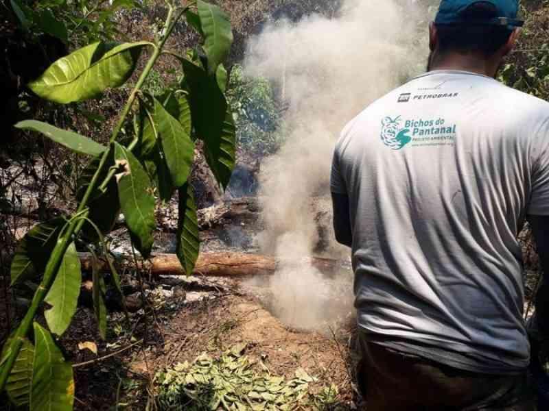 Projeto Bichos do Pantanal intensifica operações de resgates de animais e alivia sofrimento da fauna