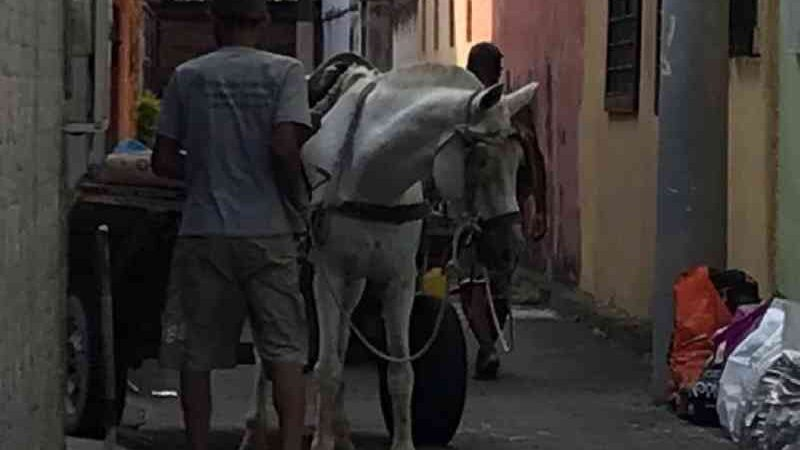 Mesmo proibidas, entregas de materiais de construção ainda são feitas com carroças em Nilópolis, RJ
