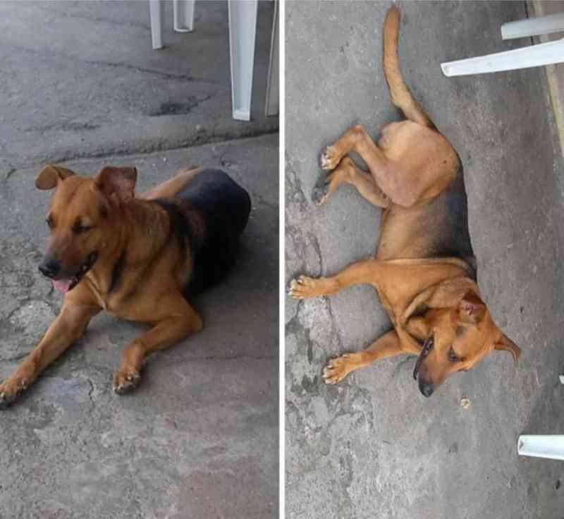 Homem espanca e mata cachorro com tiros na cabeça em Niterói, RJ