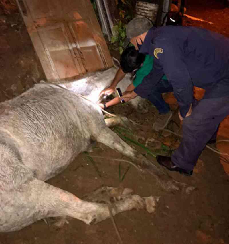 Égua encontrada desnutrida e com umas das patas quebrada teve que ser morta em Petrópolis, RJ