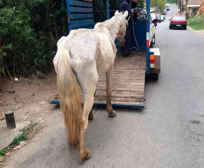 Prefeitura resgata cavalo abandonado no Floresta, em Petrópolis, RJ