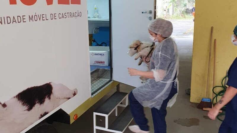 Castramóvel realiza 100 cirurgias em cães e gatos no Caramujo, em Niterói, RJ