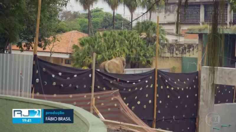 Reforma do zoológico do Rio atrasa e animais vivem em canteiro de obras com barulho e poeira