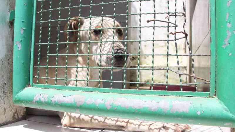 Programa de controle populacional de cães e gatos vai oferecer microchipagem e ração para abrigos em Porto Velho, RO
