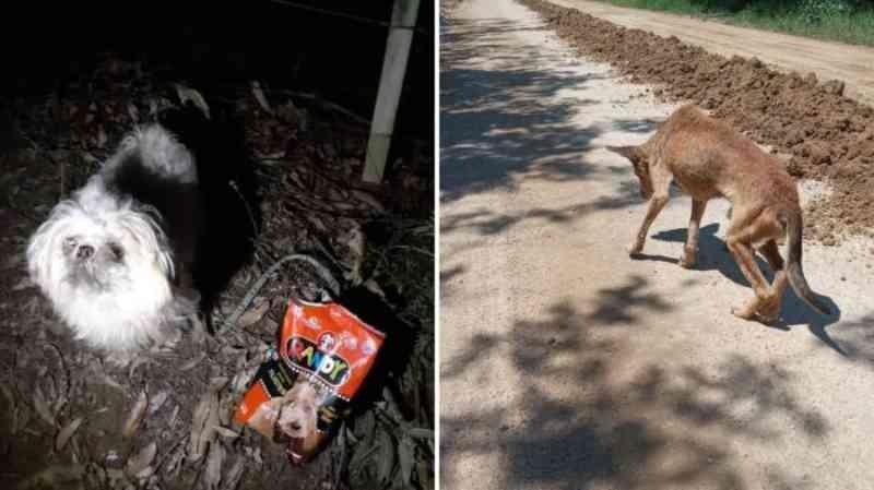 Cão quase cego é abandonado em via pública de Camaquã, RS
