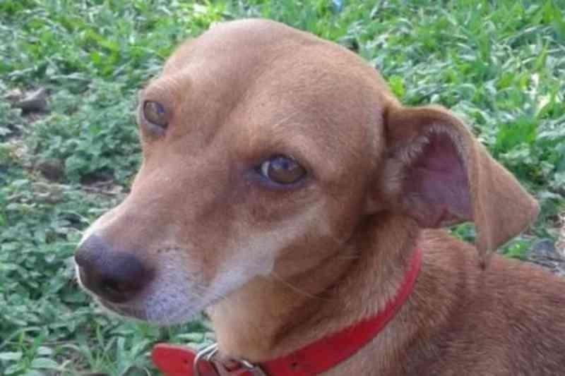 Cadela de garoto de 13 anos é morta a tiros por dono de mercado, em Sapucaia do Sul, RS