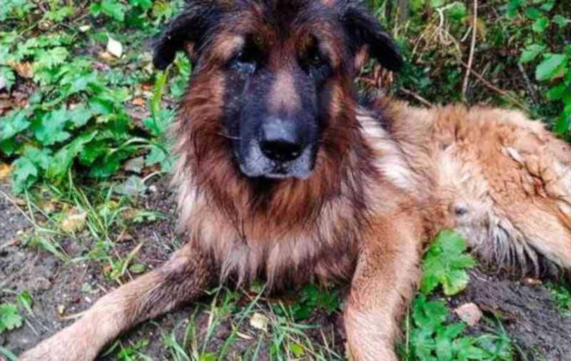 Cachorro enterrado vivo consegue fugir da cova e buscar ajuda