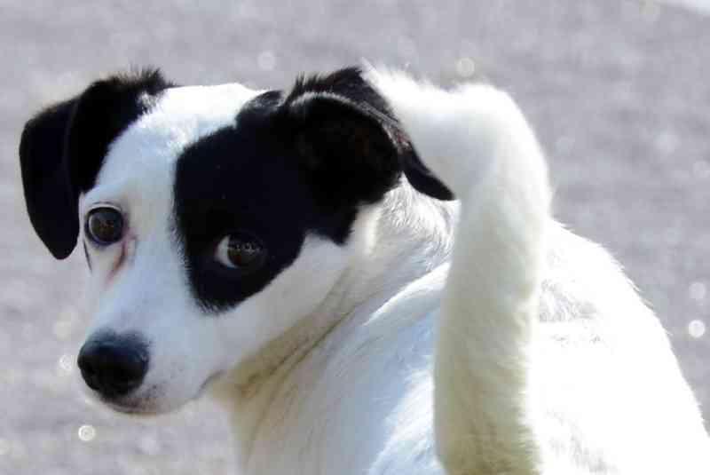 Cadastramento de cães e gatos para castração acontece em Aracaju (SE) até o dia 2 de outubro
