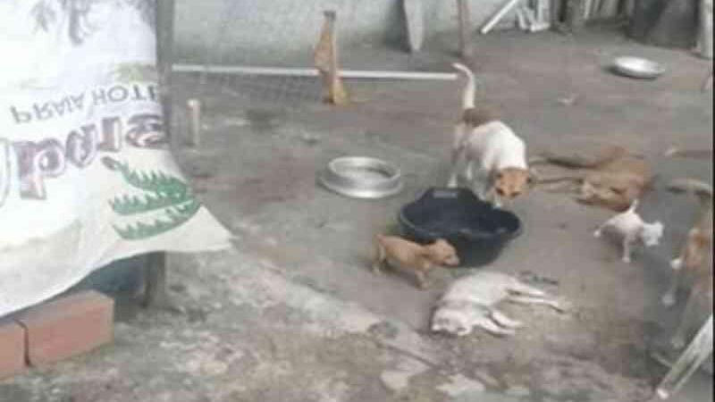 Polícia investiga invasão de ONG e morte de animais em Estância, SE
