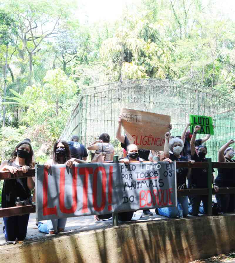 Ativistas cobram laudo da morte de leão no Bosque dos Jequitibás, em Campinas, SP