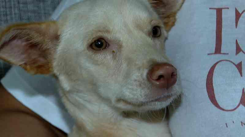 Faxineira resgata cadela com paralisia que havia sido abandonada na rua em Jardinópolis, SP