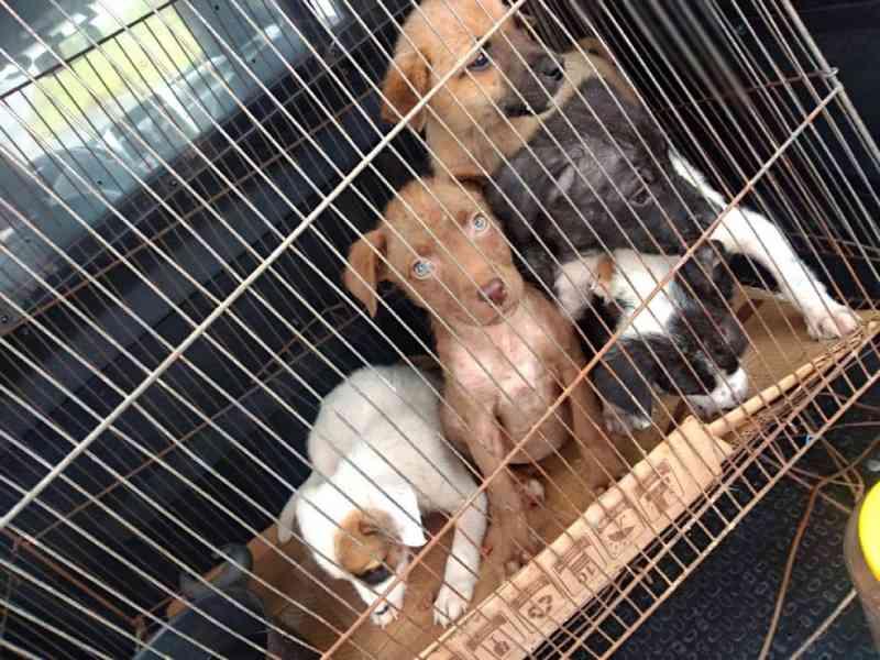 PM resgata filhotes de cachorro abandonados dentro de gaiola em ponto de ônibus no litoral de SP