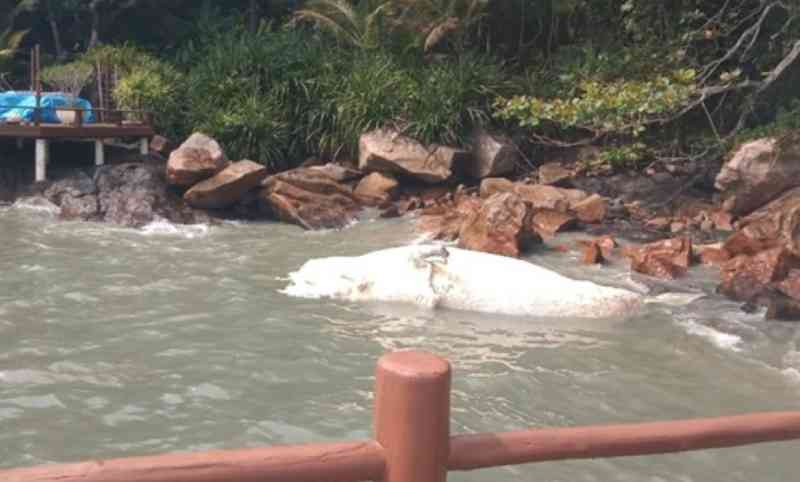 Baleia-jubarte é encontrada morta na Praia das Toninhas em Ubatuba, SP