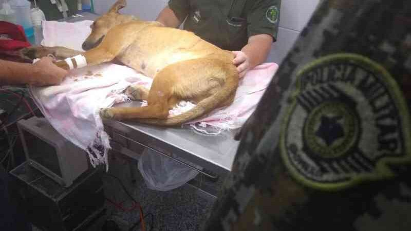 Homem é detido após quebrar pata de cachorro em Ubatuba, SP