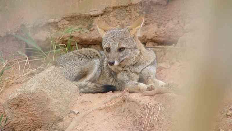 Animais silvestres sofrem com fogo, atropelamentos e caça em SP