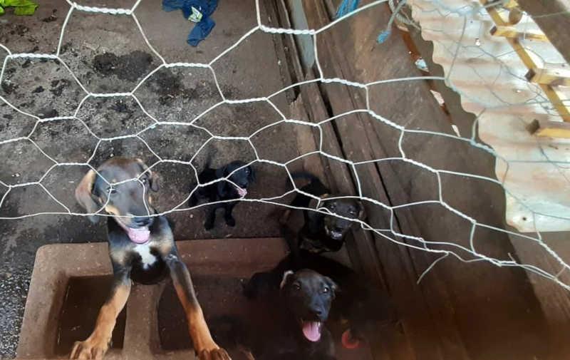 Cães em situação de maus-tratos são resgatados em Barretos (SP) — Foto: Polícia Ambiental/Divulgação