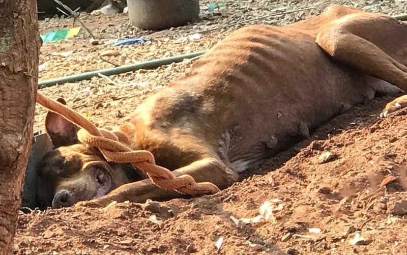 Homem é multado em R$ 24 mil após ser preso por suspeita de manter cães sem comida em Barretos, SP