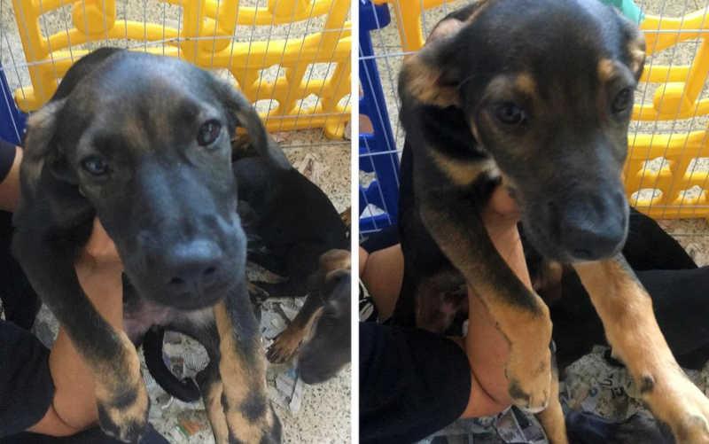 Cachorros resgatados em situação de maus-tratos são adotados em Barretos (SP) — Foto: Rosário Noris/Acervo pessoal