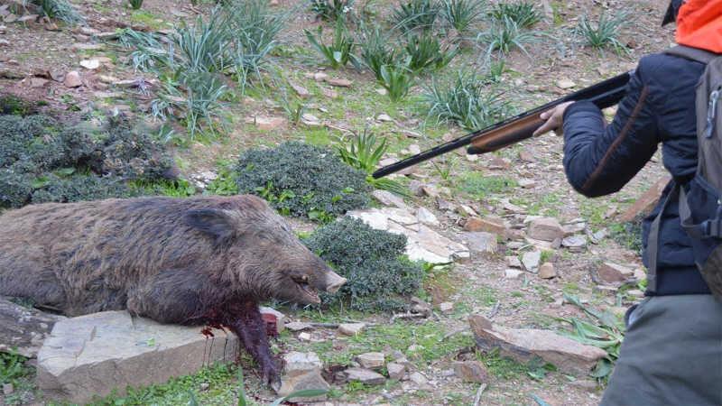 Dória apoia a matança de animais e sanciona projeto que autoriza CAÇA em SP