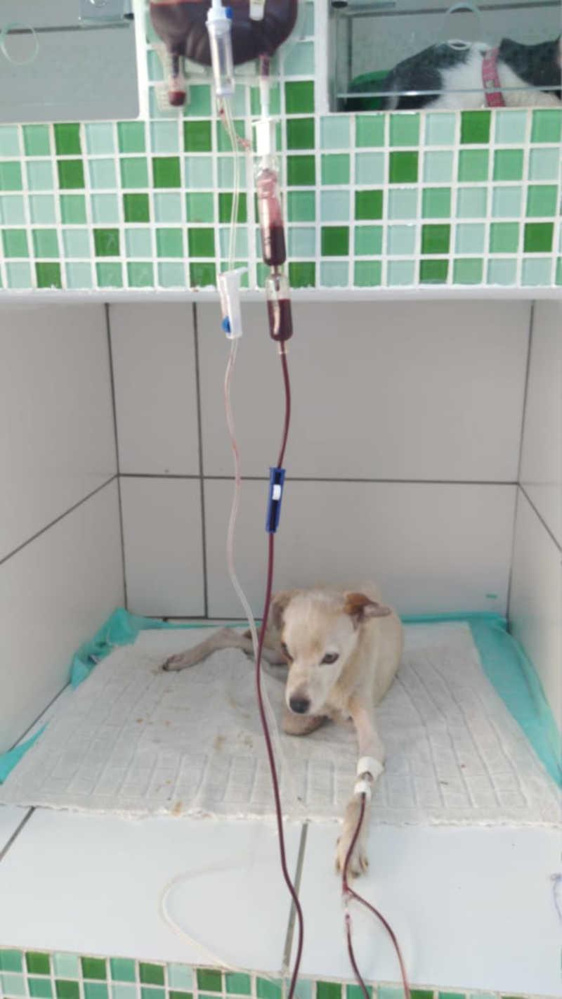Cão foi socorrido por uma ONG, levado aos cuidados de clínica veterinária, porém não resistiu (Cedida/PM Ambiental).