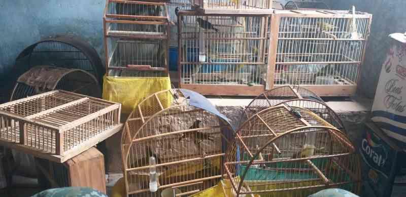 Homem é multado em R$ 76 mil por manter mais de 130 aves silvestres em cativeiro no interior de SP