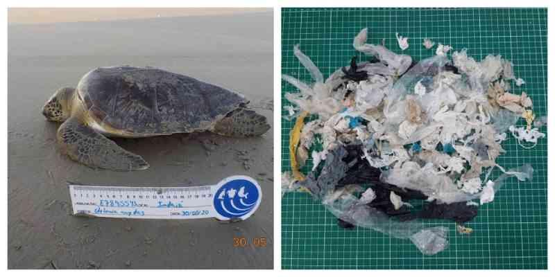 Imagens mostram lixo encontrado no estômago e corpos de animais marinhos no litoral de SP