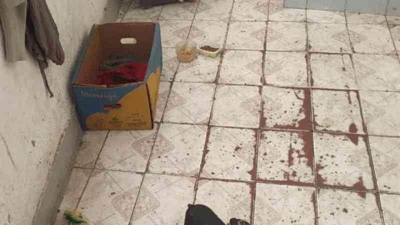 Polícia prende dono de canil clandestino na zona sul de SP com base na nova lei federal contra maus-tratos a animais