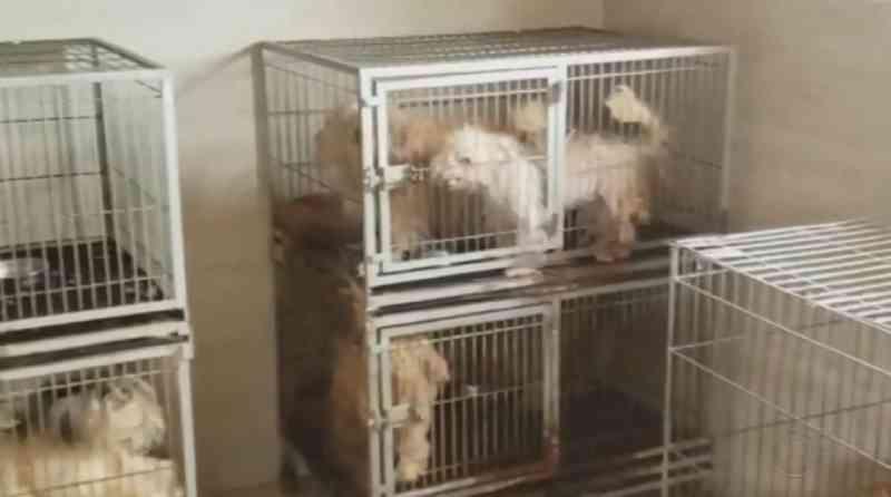 Polícia recolhe gaiolas após resgate de mais de 90 animais vítimas de maus-tratos no interior de SP