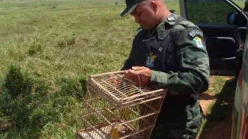 Manter animais silvestres em cativeiro sem autorização é crime, diz Secretaria de Segurança de Sergipe
