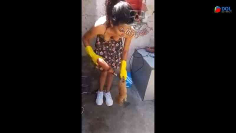 Vídeo mostra mulher introduzindo furadeira em cachorro e revolta a web