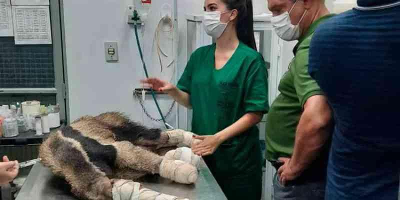 Zoológico da UFMT pode se transformar em Centro de Triagem e Tratamento de Animais