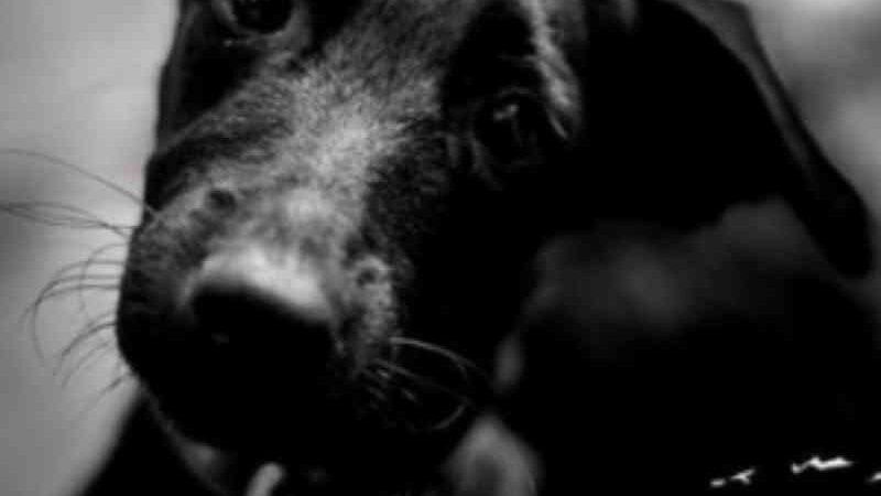 Protetor de animais luta para encontrar novo lar para mais de 170 cachorros em Maceió, AL